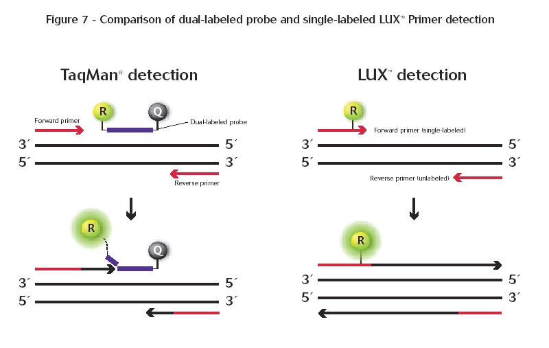 Gene Quantification Real Time Pcr Dyes And Chemistries
